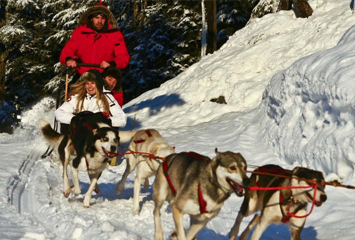 Dogsledding in the Callaghan Valley
