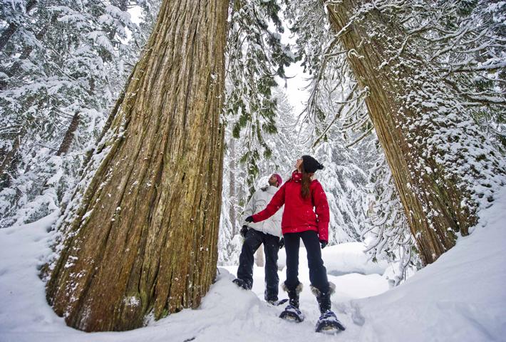 whistler snowshoeing
