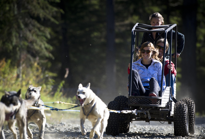 Dog Karting in The Callaghan Valley