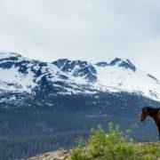 Whistler horseback tours
