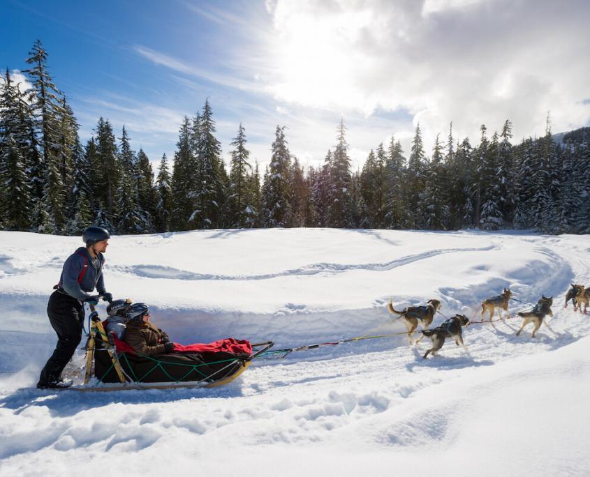 Canadian Wilderness Adventures Whistler Dog Sledding Tours
