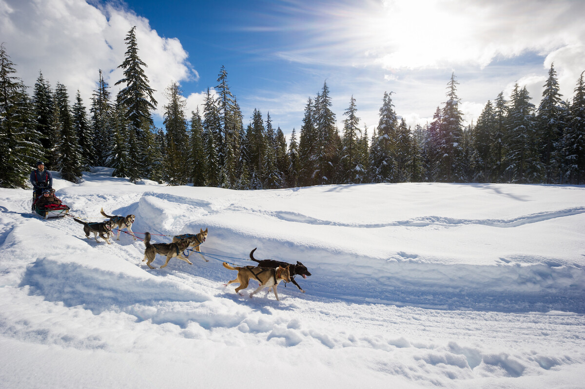 Canadian Wilderness Adventures Whistler Dog Sledding Tours