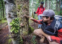 hikers examine tree conk