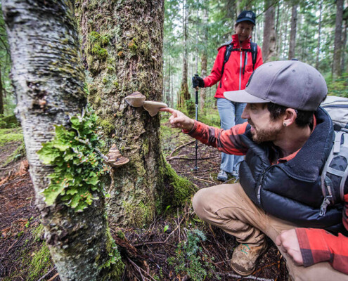 hikers examine tree conk