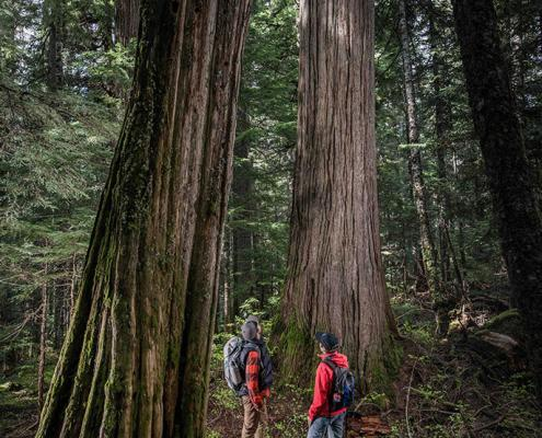 two hikers at the base of an ancient cedar in the callaghan valley